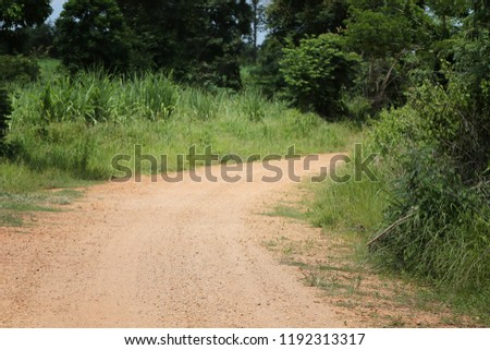Rural Road to the forest with trees on both sides during the daytime. #1192313317