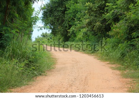 Rural Road to the forest with trees on both sides during the daytime. #1203456613