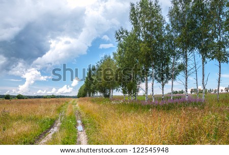 Rural road with birches along summer field
