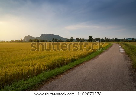 Rural road with green grass and golden rice fields. Beautiful gravel road and golden rice fields on summer day with a background of mountain and bright blue sky.