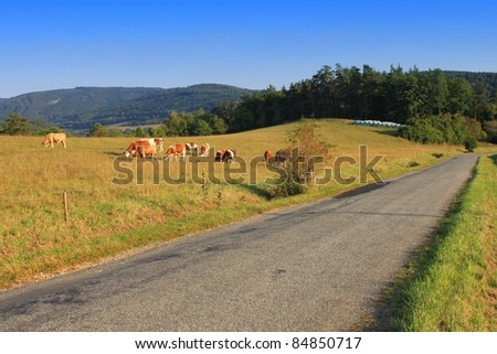 rural roads around the pastures in Czech Republic - stock photo
