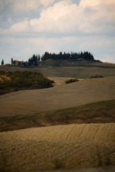 rural scenary in tuscany with cypress tree