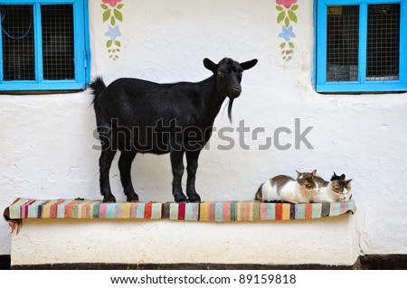 Rural scene. Goat and a cat on the bench. Farmhouse.