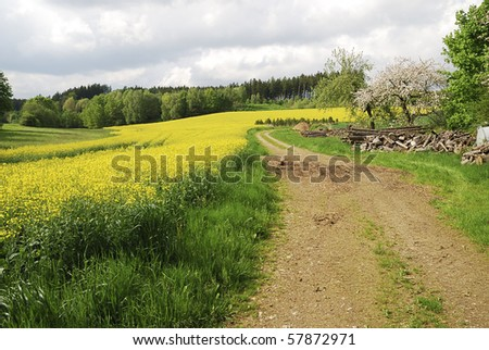 Rural spring scenic with a conola field #57872971