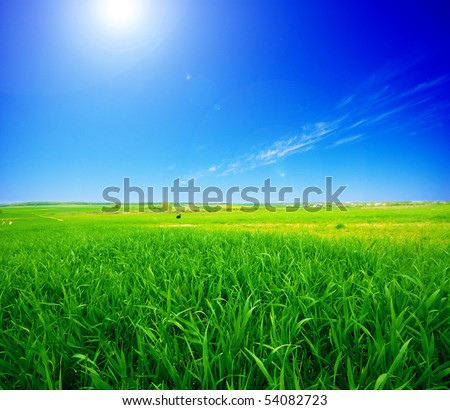 Rural summer landscape. Green meadow and clear blue sky