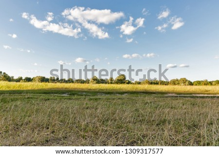 Rural summer landscape in Koncha-Zaspa, Ukraine. Focus on a foreground. Koncha-Zaspa is a historic neighbourhood of Kiev. In the 1920s the territory was the first state preserve. Zdjęcia stock ©