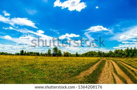 Rural summer meadow road landscape. Summer meadow flowers road landscape. Meadow flowers road. Summer meadow yellow flowers road view