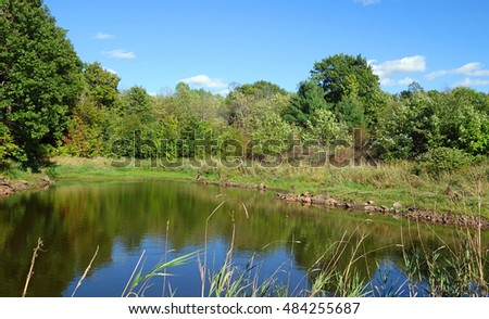 Rural Sunny Water Pond Scene - Pond of water with a sunny reflection of trees in a wooded rural area of Ontario, Canada. #484255687