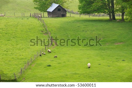 Rural Virginia scene with pasture, old decaying barn and sheep and lambs horizontal
