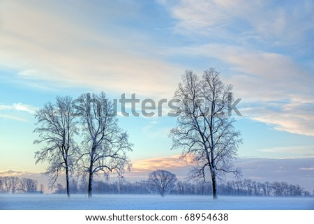 Rural winter landscape of lightly frosted trees and ground fog, Michigan, USA