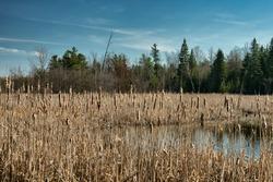 Rushy Swamp