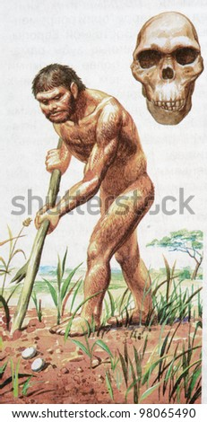 RUSSIA - CIRCA 2009: Illustration from the textbook Biology, published in the Russia shows ancestor of humans - Homo habilis, circa 2009