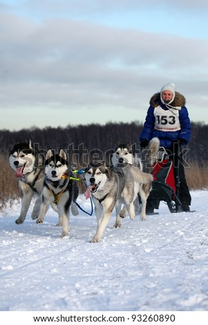 "RUSSIA, MOSCOW - JANUARY 24: Unidentified participant competes in arrival ""Races on the dog teams "" Cup RFES"" on January 24, 2010 in Moscow, Russia"