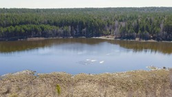 Russia, the Urals. Birds land on the water. Whooper swan on the open water of the pond. Latin name Cygnus cygnus. Spring, Aerial View