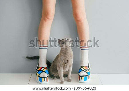 Russian blue cat looking up at beautiful female legs in colorful fashionable high wedge leather sandals on white table. Asian anime style concept. Women wearing high sole summer stylish shoes