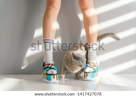 Russian blue cat lying between beautiful female legs in colorful fashionable high wedge leather sandals on white table. Asian anime style concept. Women wearing high sole summer stylish shoes.
