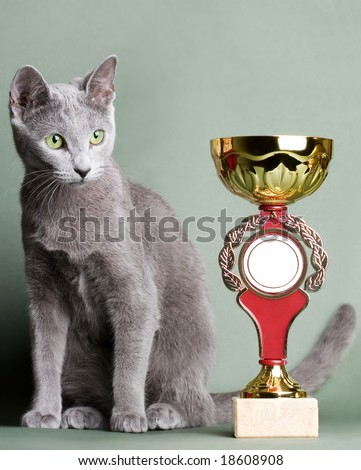 Russian blue cat with a cup