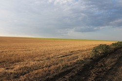 Russian dry field after harvesting
