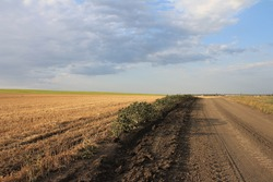 Russian dry field after harvesting. Road in the field