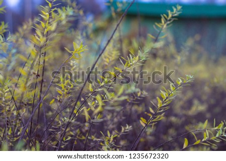 Russian open spaces and forests. Flora. Floral background. Flora of Russia. #1235672320