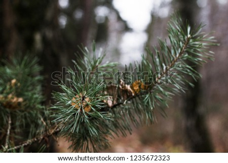 Russian open spaces and forests. Flora. Floral background. Flora of Russia. #1235672323