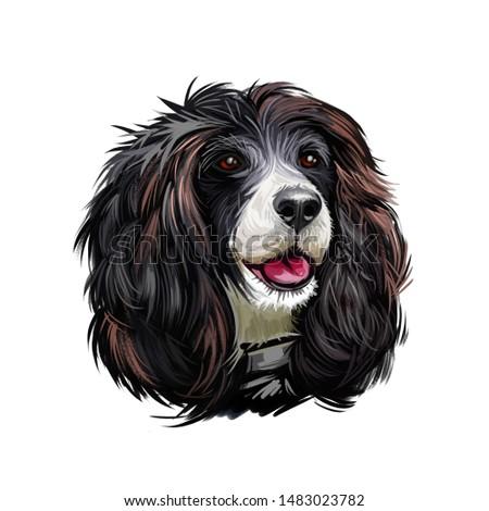 Russian Spaniel dog portrait isolated on white. Digital art illustration for web, t-shirt print and puppy food cover design. Rosyjski Spaniel, cross breeding English Cocker and Springer Spaniels Zdjęcia stock ©