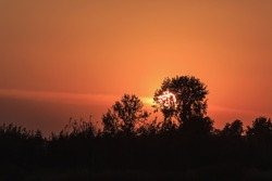 Russian trees at sunset