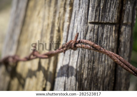 Rusted curl of sharp barbed wire against an aging fence post.gf