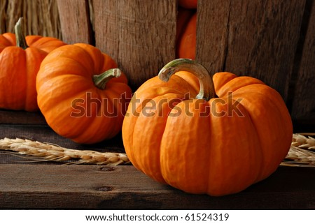 Rustic autumn still life with mini pumpkins on old wood with vintage basket in background.  Macro with shallow dof.