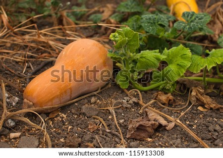 Rustic autumn still life with pumpkins on old wood.