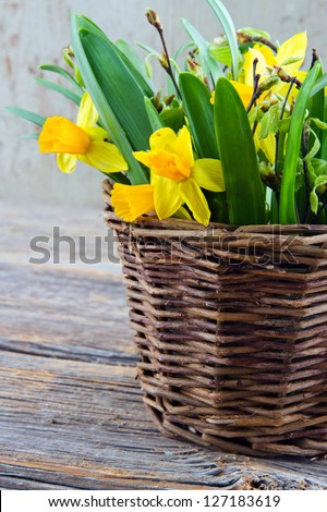 Rustic brown easter basket full of yellow daffodils on wooden background
