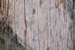 Rustic chic trendy vintage grey wood grain texture with old discoloured pastel style paint