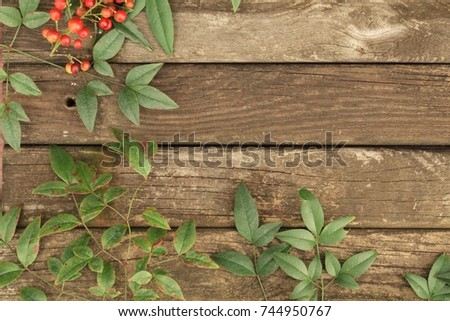 rustic country wood background with red berries