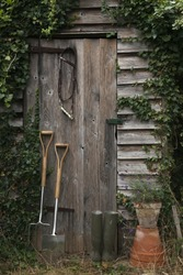 Rustic old garden shed covered in ivy with a fork and spade leaning on the door.