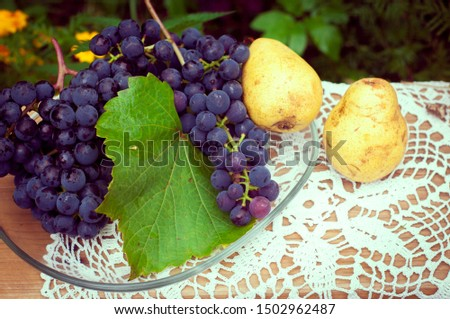 rustic rustic still life. Black grapes with yellow pear Duchesse on a wooden bench with a carved tablecloth