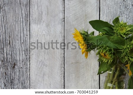 Rustic Sunflower Background 703041259