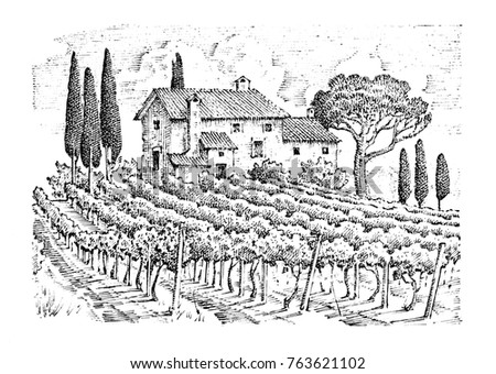 rustic vineyard. rural...