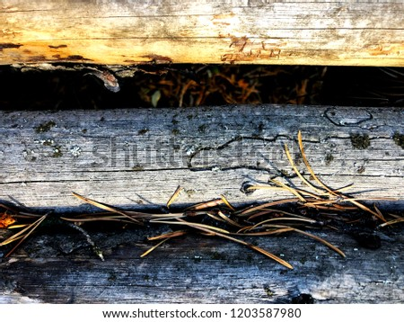 Rustic wood background #1203587980