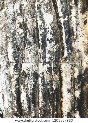 Rustic wood background #1203587983