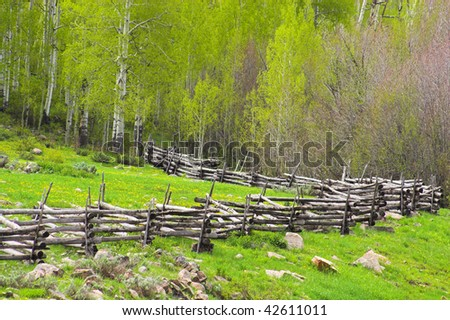 Rustic wooden fence winding through aspen forest in Colorado