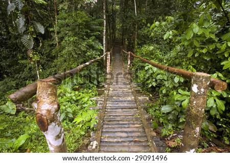 Rustic wooden footbridge in the Amazon rainforest, Ecuador