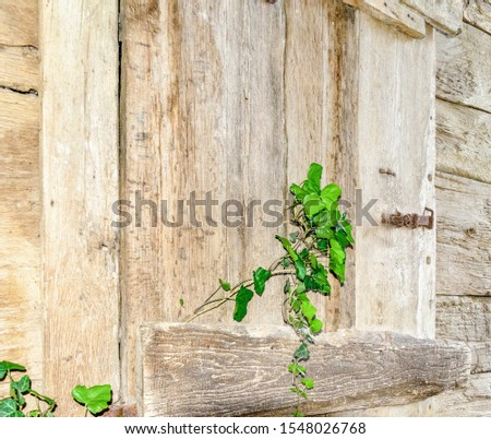 rustical window with plant growing