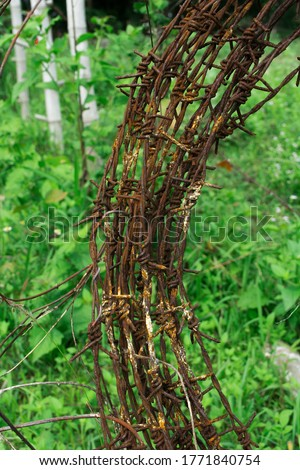 Rusty barbed wire on a green grass background.
