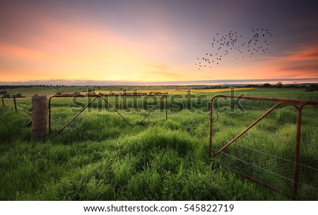 Rusty gates open to wheat and in the distance canola crops and livestock grazing fields.