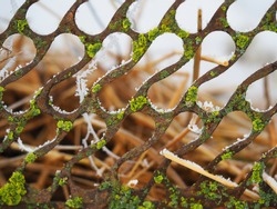 rusty iron grating with green lichen close-up, horizontal pebble texture image with soft focus, blurred background and place for text