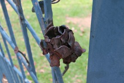 rusty metal flower sculpture and blue fence.