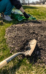 Rusty metal shovel on brown fertile soil and shredded wood with blurred background of man prepare ground for planting and growing tree, garden cultivation in spring and summer. Landscape care service.