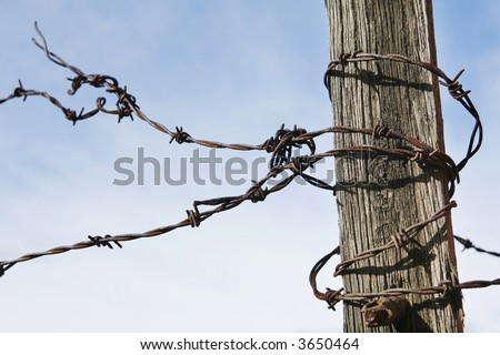 Rusty old Barbed Wire curled around old fence post