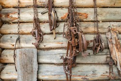 Rusty traps hanging on the wooden wall. Hunting equipment. Different traps used for keeping safe farming fields from wild animals