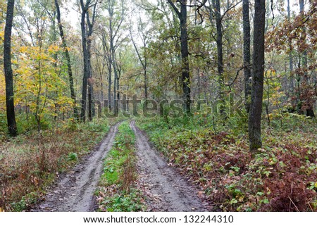 rut road in autumn forest - stock photo